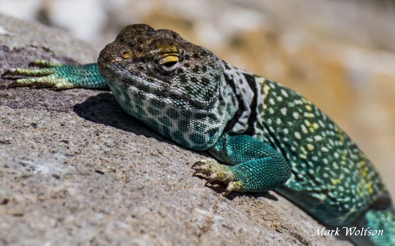 Tucson Reptile & Amphibian Show